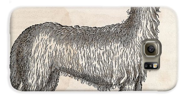 South American Camelid Galaxy S6 Case by Middle Temple Library