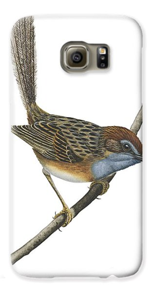 Southern Emu Wren Galaxy S6 Case by Anonymous