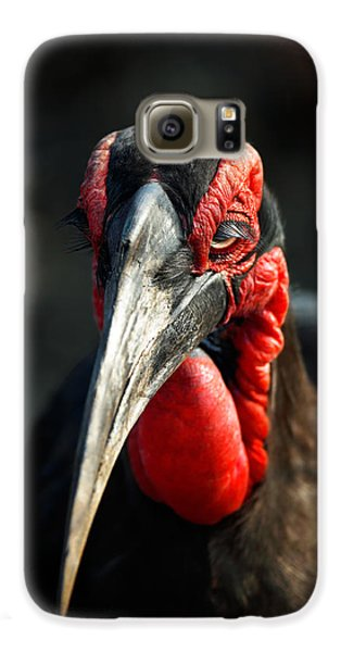 Southern Ground Hornbill Portrait Front View Galaxy S6 Case by Johan Swanepoel
