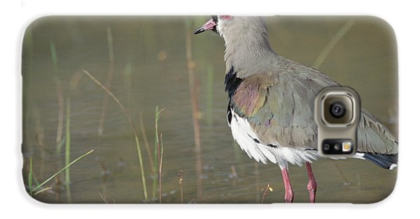 Southern Lapwing In Marshland Pantanal Galaxy S6 Case by Tui De Roy