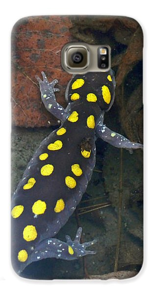 Spotted Salamander Galaxy S6 Case by Christina Rollo