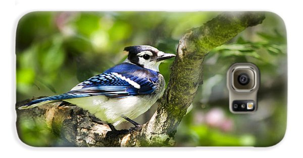 Spring Blue Jay Galaxy S6 Case by Christina Rollo