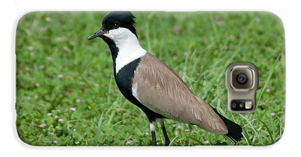 Spur-winged Plover Galaxy S6 Case by Nigel Downer