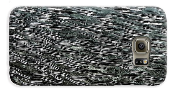 Striped Catfish Galaxy S6 Case by Ethan Daniels