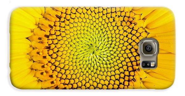 Sunflower  Galaxy S6 Case by Edward Fielding