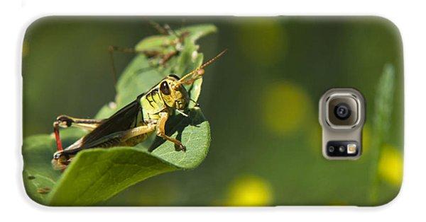 Sunny Green Grasshopper Galaxy S6 Case by Christina Rollo
