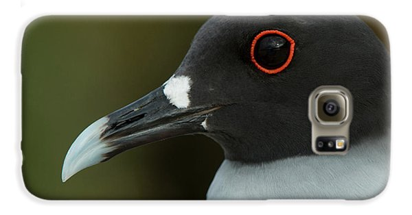 Swallow-tailed Gull (larus Furcatus Galaxy S6 Case by Pete Oxford