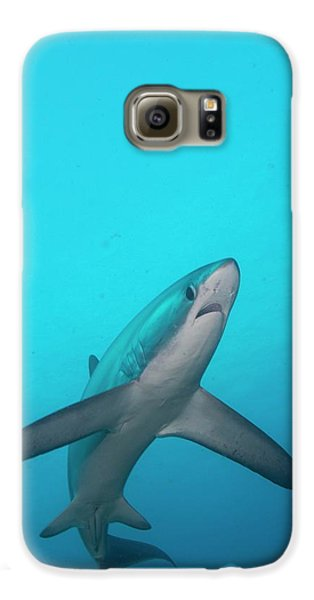 Swimming Thresher Shark Galaxy S6 Case by Scubazoo