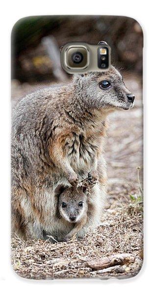 Tammar Wallaby (macropus Eugenii Galaxy S6 Case by Martin Zwick