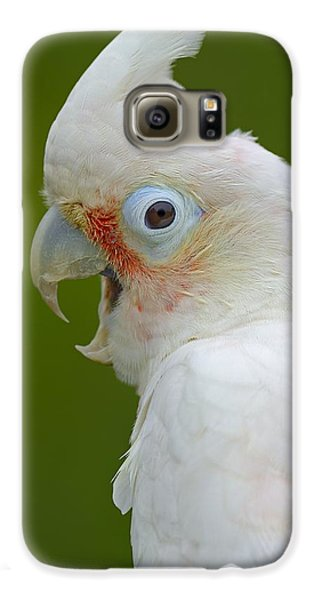 Tanimbar Correla Galaxy S6 Case by Tony Beck