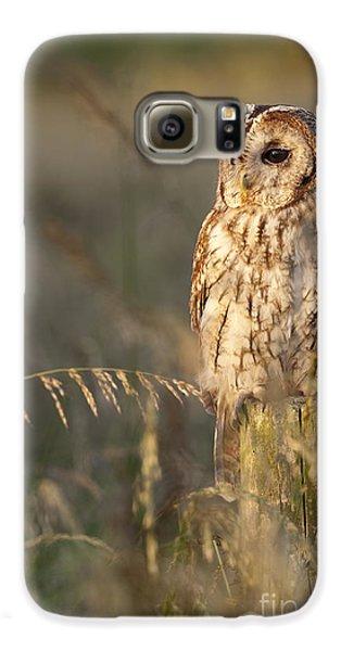 Tawny Owl Galaxy S6 Case by Tim Gainey