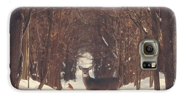 The Forest Of Snow White Galaxy S6 Case by Carrie Ann Grippo-Pike