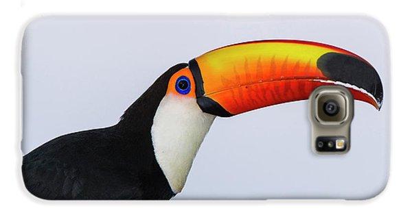Toco Toucan (ramphastos Toco Galaxy S6 Case by Pete Oxford