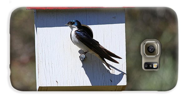 Tree Swallow Home Galaxy S6 Case by Mike  Dawson
