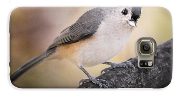 Tufted Titmouse Galaxy S6 Case by Bill Wakeley