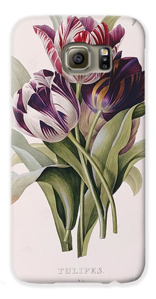 Tulips Galaxy S6 Case by Pierre Joseph Redoute