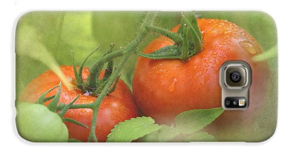 Vine Ripened Tomatoes Galaxy S6 Case by Angie Vogel