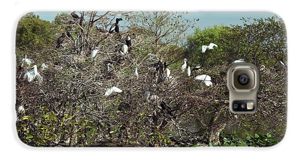 Wading Birds Roosting In A Tree Galaxy S6 Case by Bob Gibbons