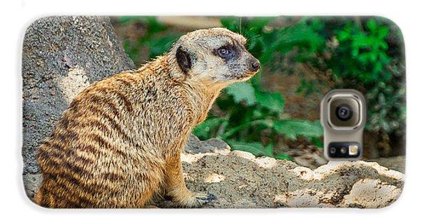 Watchful Meerkat Galaxy S6 Case by Jon Woodhams