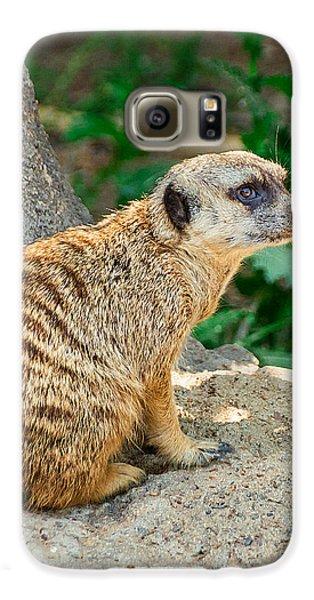 Watchful Meerkat Vertical Galaxy S6 Case by Jon Woodhams