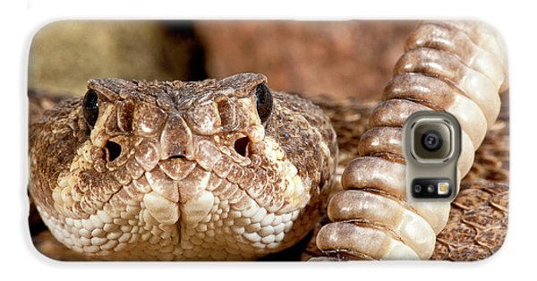 Western Diamondback Rattlesnake Galaxy S6 Case by David Northcott