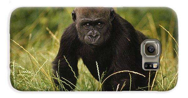 Western Lowland Gorilla Juvenile Galaxy S6 Case by Gerry Ellis