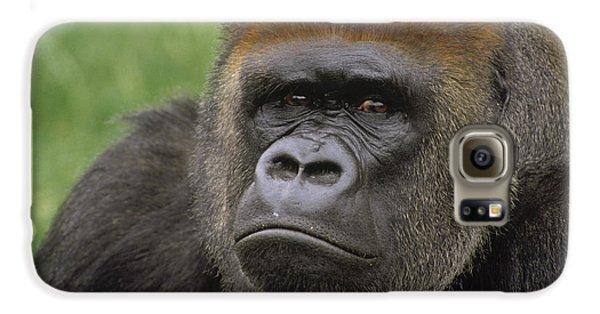 Western Lowland Gorilla Silverback Galaxy S6 Case by Gerry Ellis