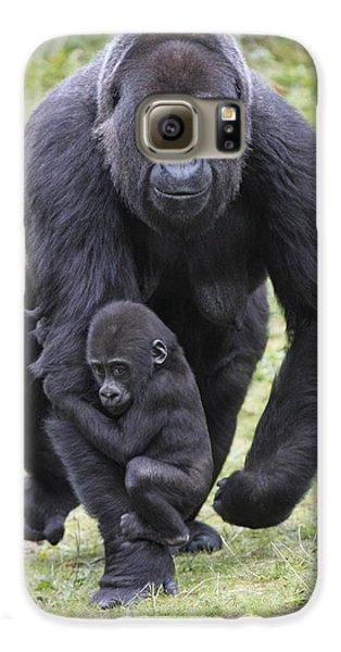 Western Lowland Gorilla Walking Galaxy S6 Case by Duncan Usher