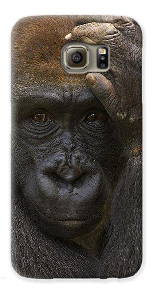 Western Lowland Gorilla With Hand Galaxy S6 Case by San Diego Zoo
