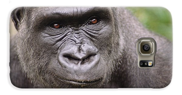 Western Lowland Gorilla Young Male Galaxy S6 Case by Gerry Ellis
