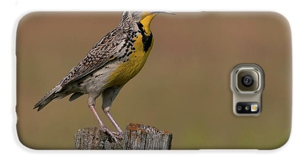 Western Meadowlark.. Galaxy S6 Case by Nina Stavlund