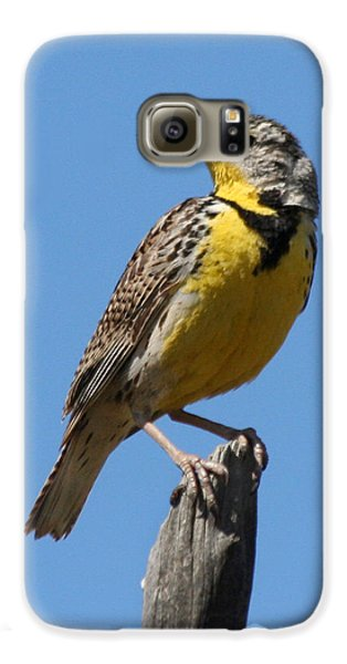 Western Meadowlark Perching Galaxy S6 Case by Bob and Jan Shriner