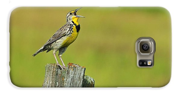 Western Meadowlark Galaxy S6 Case by Tony Beck