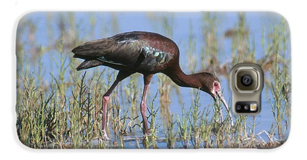White-faced Ibis Galaxy S6 Case by Anthony Mercieca