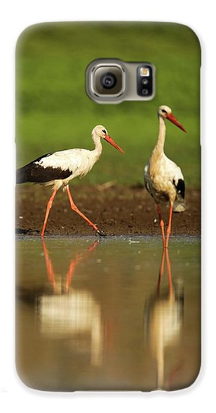 White Stork (ciconia Ciconia) Galaxy S6 Case by Photostock-israel