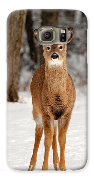 Whitetail In Snow Galaxy S6 Case by Christina Rollo