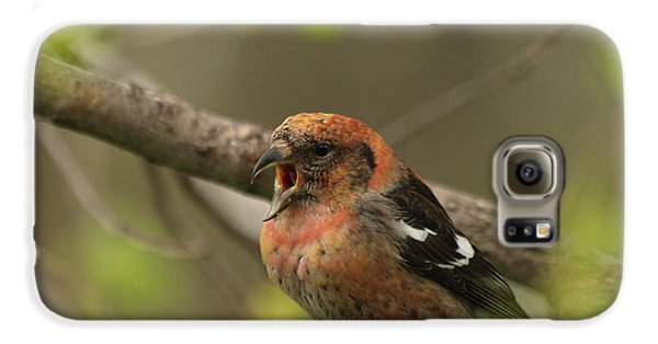 White-winged Crossbill Galaxy S6 Case by James Peterson