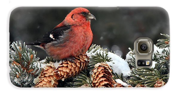 White-winged Crossbill Galaxy S6 Case by Nick  Saunders