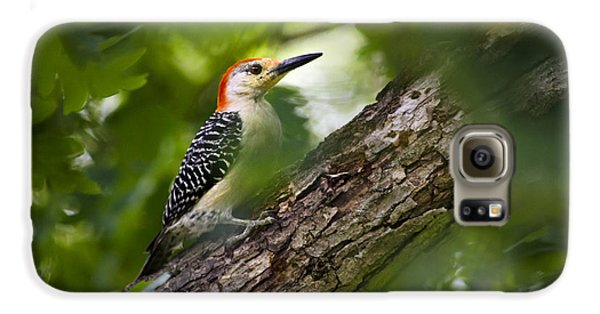 Red Bellied Woodpecker Galaxy S6 Case by Christina Rollo