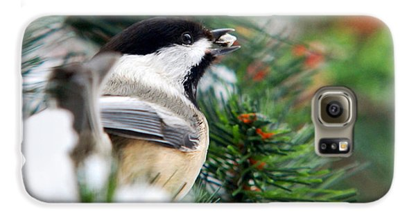 Winter Chickadee With Seed Galaxy S6 Case by Christina Rollo