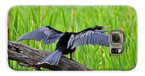 Wonderful Wings Galaxy S6 Case by Al Powell Photography USA