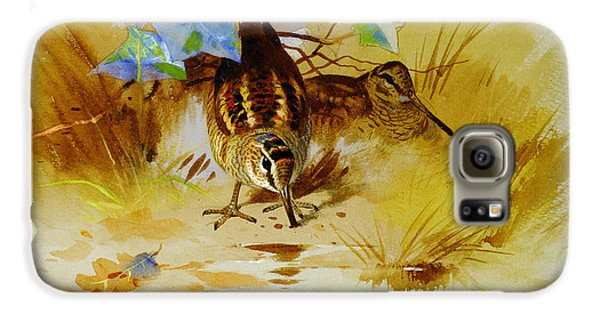 Woodcock In A Sandy Hollow Galaxy S6 Case by Celestial Images