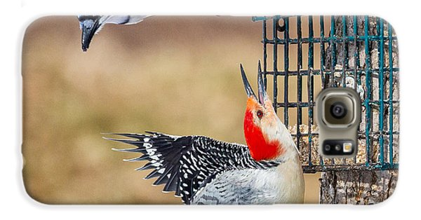 Woodpeckers And Blue Jays Square Galaxy S6 Case by Bill Wakeley