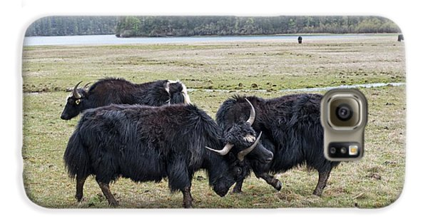 Yaks Fighting In Potatso National Park Galaxy S6 Case by Tony Camacho