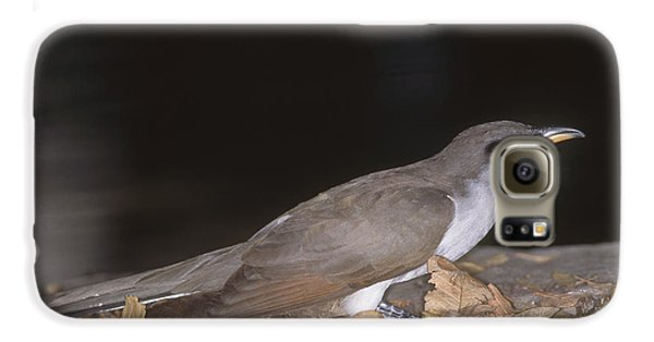 Yellow-billed Cuckoo Galaxy S6 Case by Gregory G. Dimijian, M.D.