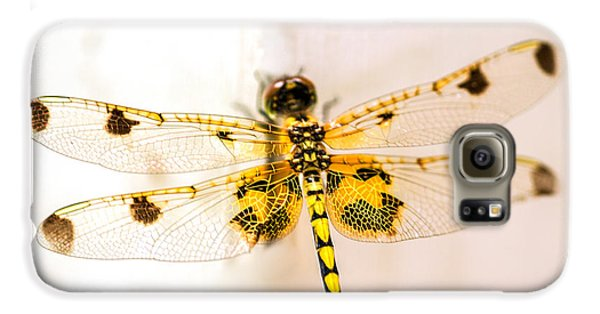 Yellow Dragonfly Pantala Flavescens Galaxy S6 Case by Iris Richardson