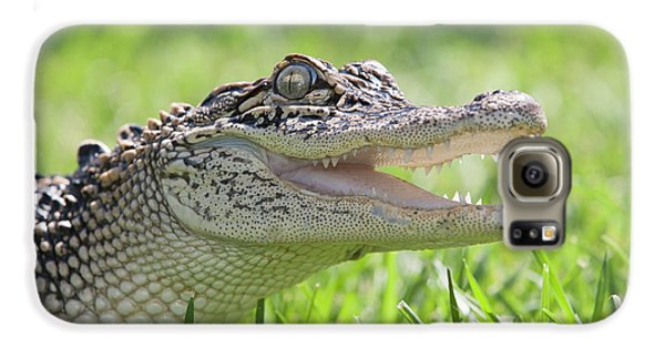 Young Alligator With Mouth Open Galaxy S6 Case by Piperanne Worcester