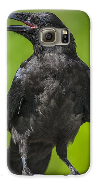 Young Raven Galaxy S6 Case by Tim Grams