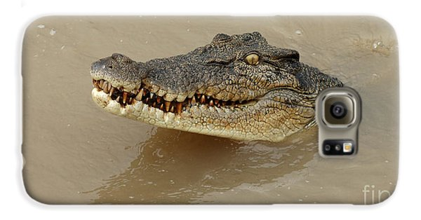 Salt Water Crocodile 3 Galaxy S6 Case by Bob Christopher