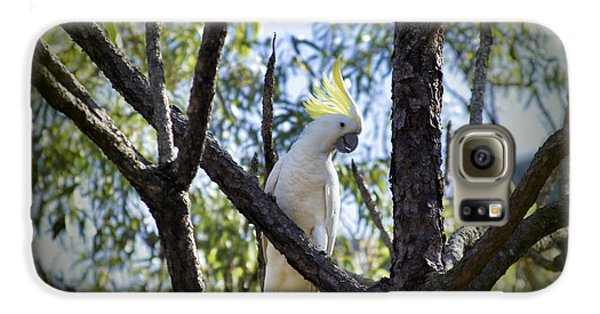 Sulphur Crested Cockatoo Galaxy S6 Case by Douglas Barnard